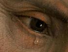 Eye-and-Tear